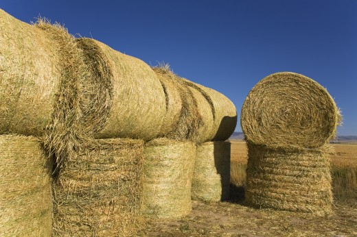 Hay Bales : Stock Photo