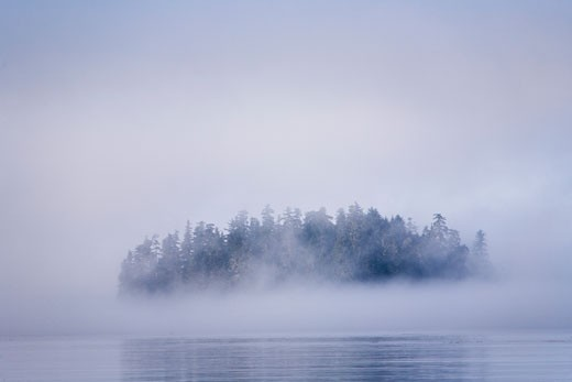 Foggy island with spruce trees near Pybus Bay, Inside Passage, Southeast Alaska, USA   : Stock Photo