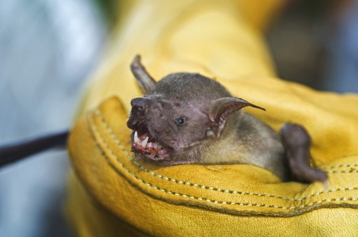 A fishing bat being held : Stock Photo