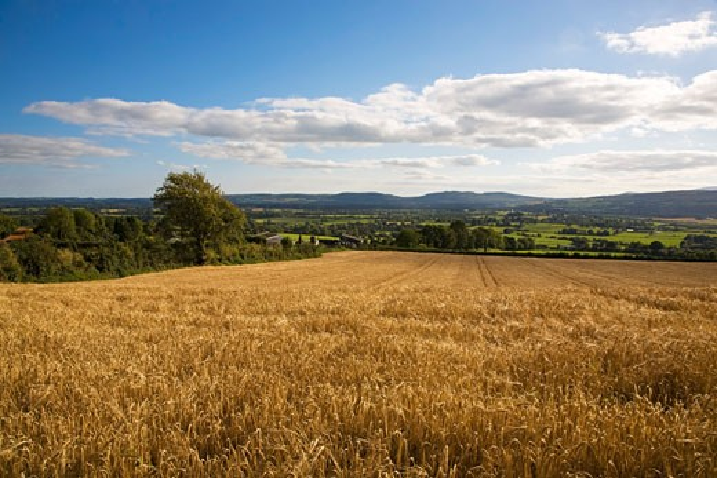 Barley field near Mooncoin, Co Kilkenny, Ireland   : Stock Photo