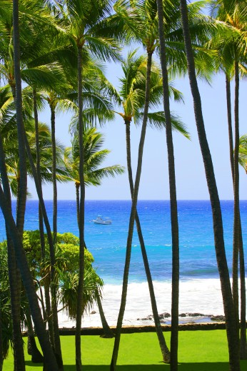 Stock Photo: 1889R-3622 Palm trees in Hawaii