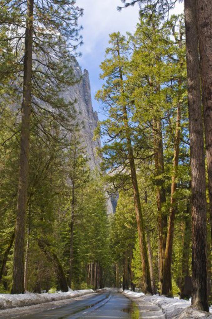 Treelined rural road, Yosemite National Park, USA : Stock Photo