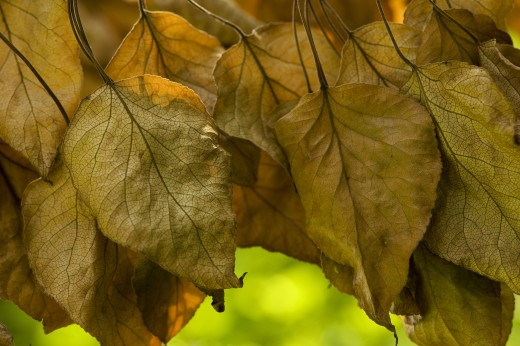 Stock Photo: 1889R-36760 Dead leaves