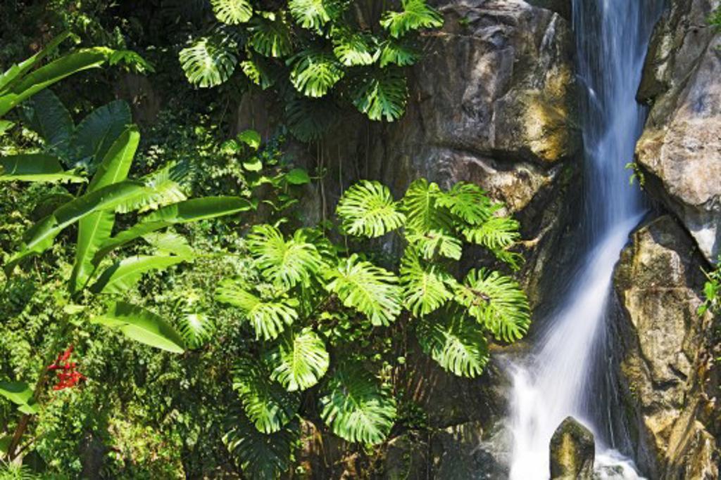 Waterfall, Sentosa, Singapore : Stock Photo