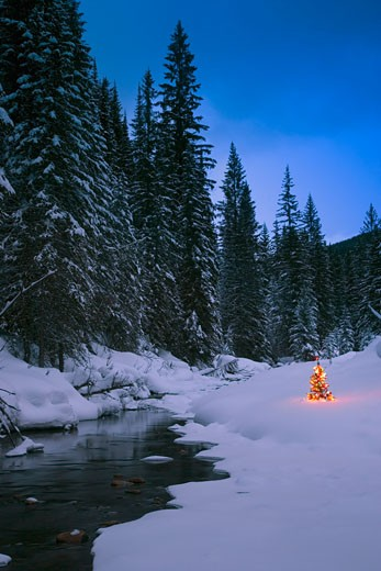 Glowing Christmas tree by mountain stream : Stock Photo
