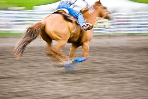 Horse racing : Stock Photo