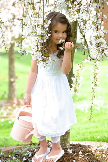 Little girl smelling cherry blossoms : Stock Photo