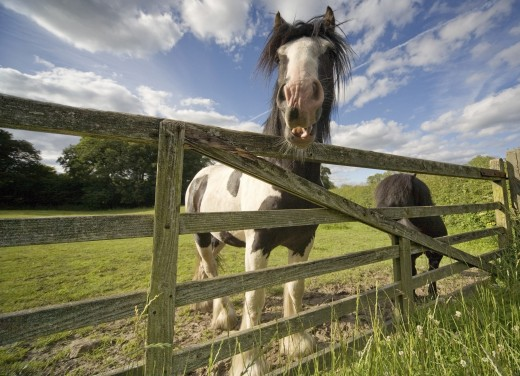 Stock Photo: 1889R-38644 North Yorkshire, England; Horses