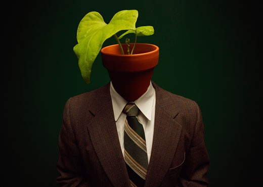 Plant on head of human body : Stock Photo