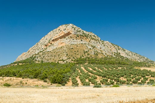 Olive trees and quarrying stone, Andalucia, Spain, Europe : Stock Photo