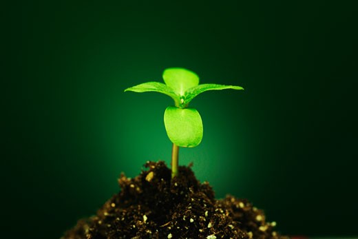 New seedling : Stock Photo