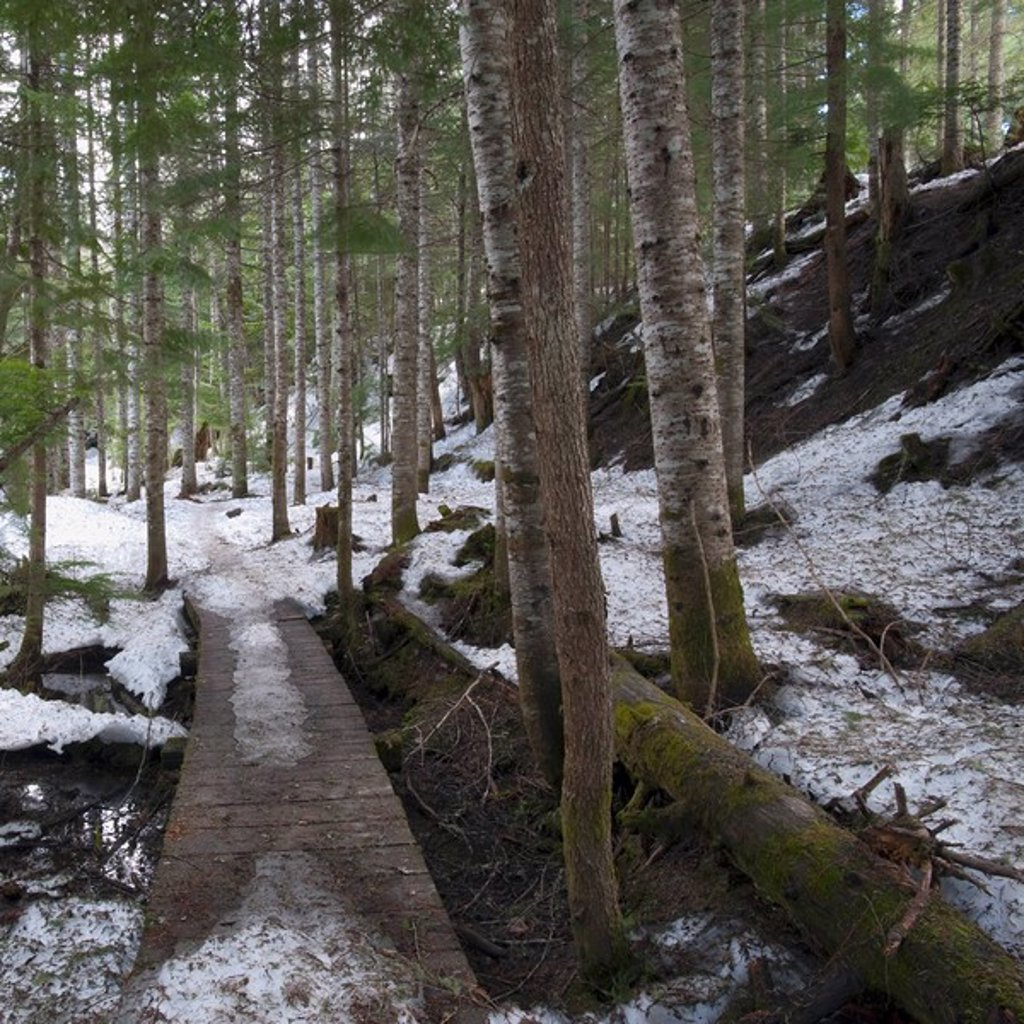 Stock Photo: 1889R-47221 Winter forest, Whistler, British Columbia, Canada