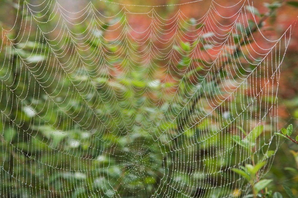 Detail of spider web : Stock Photo
