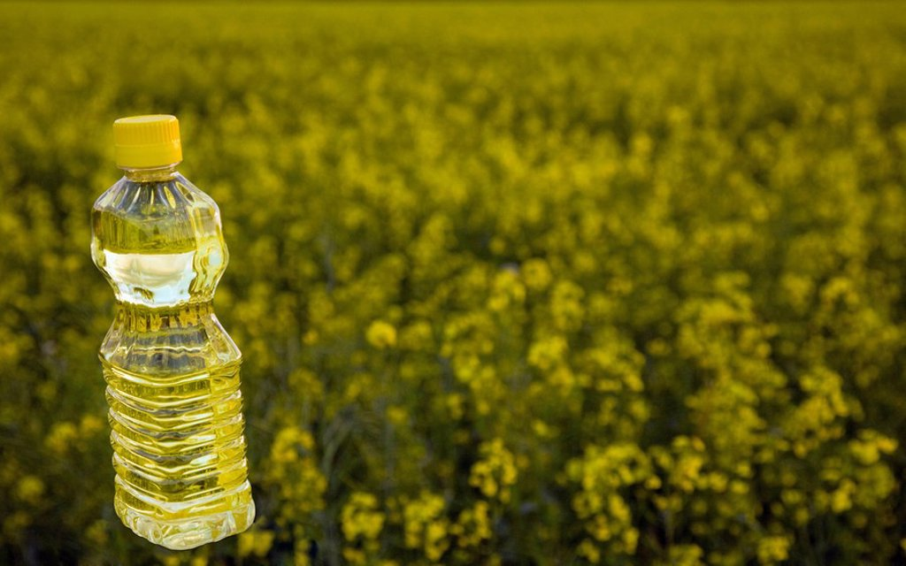 Bottle of oil in canola field : Stock Photo
