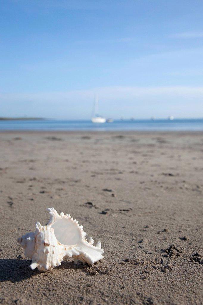 Sea shell, Low Newton beach, Northumberland, England : Stock Photo