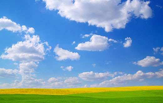 Stock Photo: 1889R-4913 Scenic view of meadow and canola crop