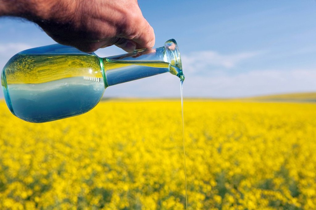 Stock Photo: 1889R-50433 alberta, canada, a jar of canola oil being poured over a flowering canola field