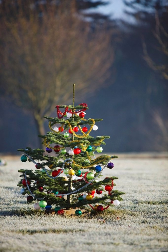an outdoor tree decorated for christmas : Stock Photo