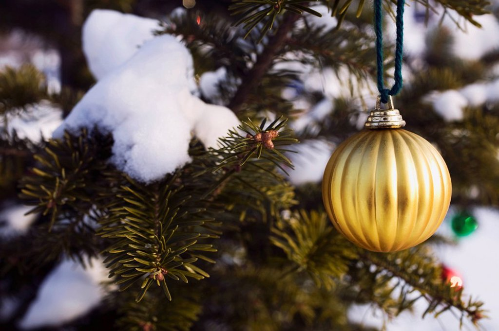 an ornament hanging from a tree covered in snow : Stock Photo