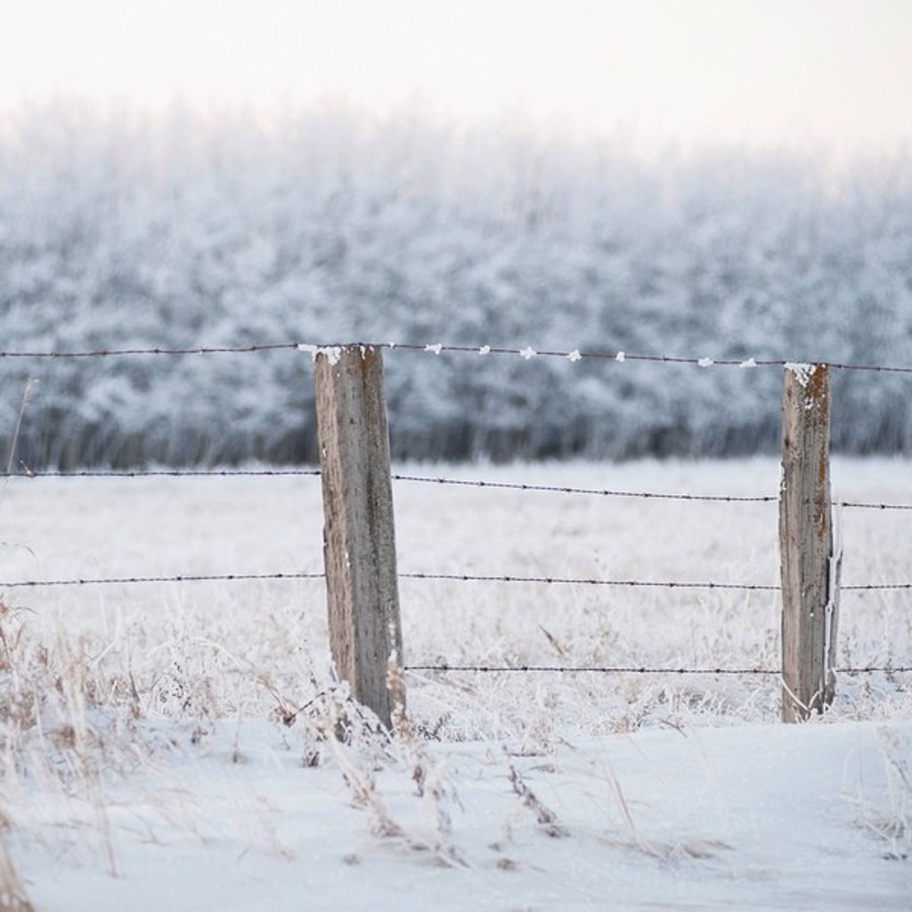 winnipeg, manitoba, canada, a snow covered field and fence : Stock Photo