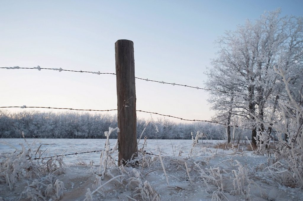 winnipeg, manitoba, canada, a barbed wire fence in the snow in winter : Stock Photo