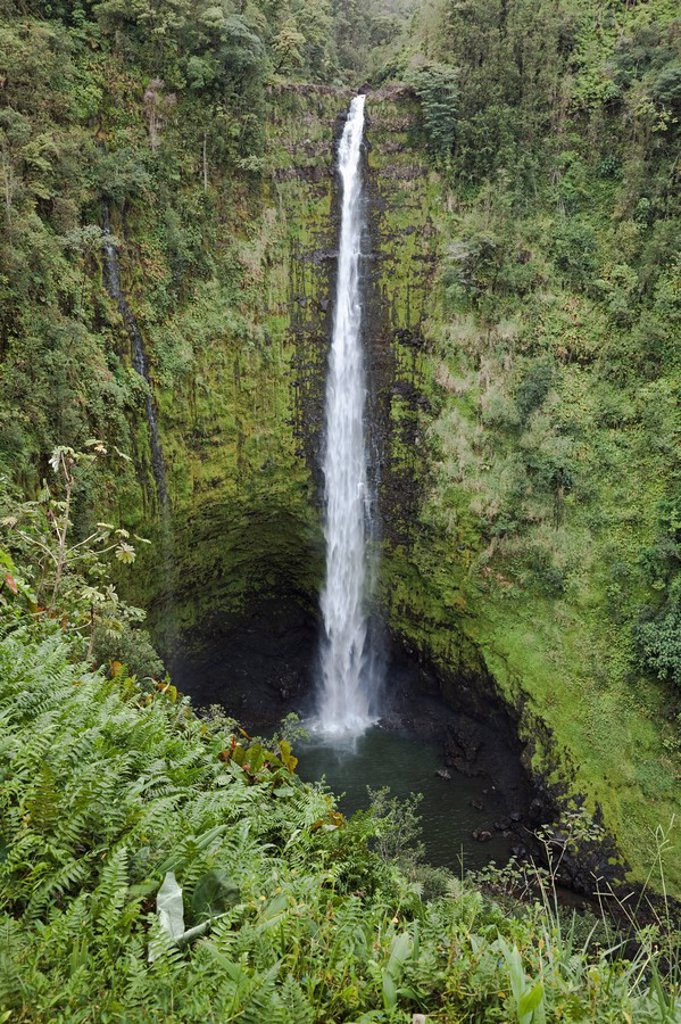 Stock Photo: 1889R-54366 Hawaii, United States Of America, Akaka Falls With Cliffs And A Gorge Covered With Rainforest Plants