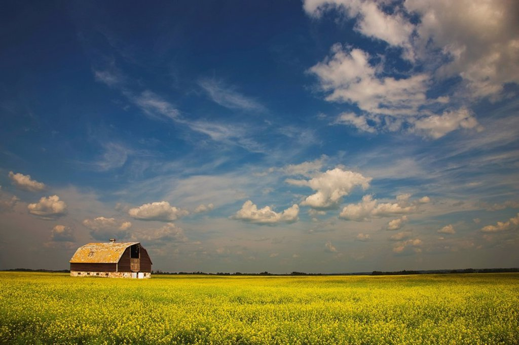 Alberta, Canada, An Old Barn In A Field : Stock Photo