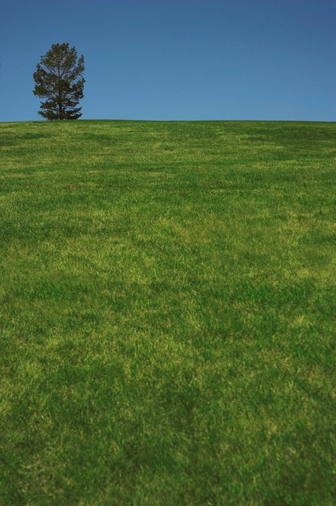 Alberta, Canada, A Lone Tree In A Field : Stock Photo