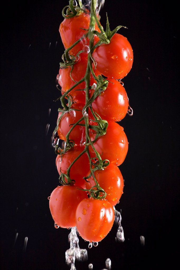 grape tomatoes on the vine suspended with water pouring off them : Stock Photo
