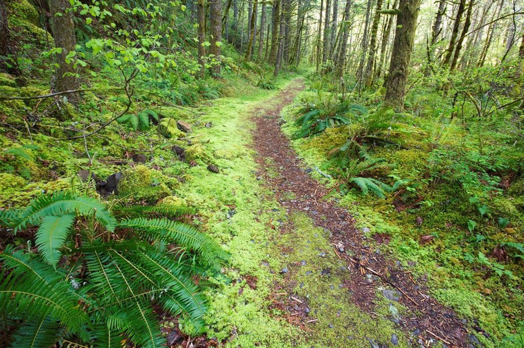 a trail leading through the forest : Stock Photo