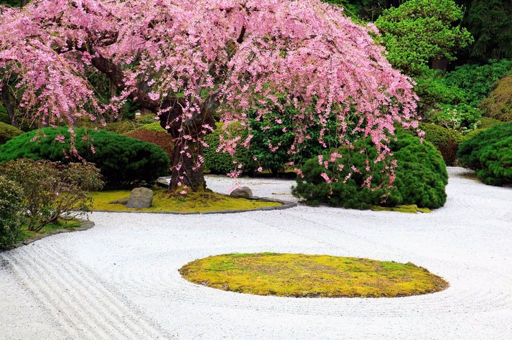 portland, oregon, united states of america, spring blossoms at portland japanese garden : Stock Photo