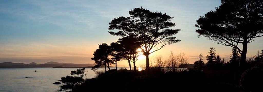 Parknasilla, County Kerry, Ireland, Sunset And The Silhouette Of Trees In Kenmare Bay : Stock Photo