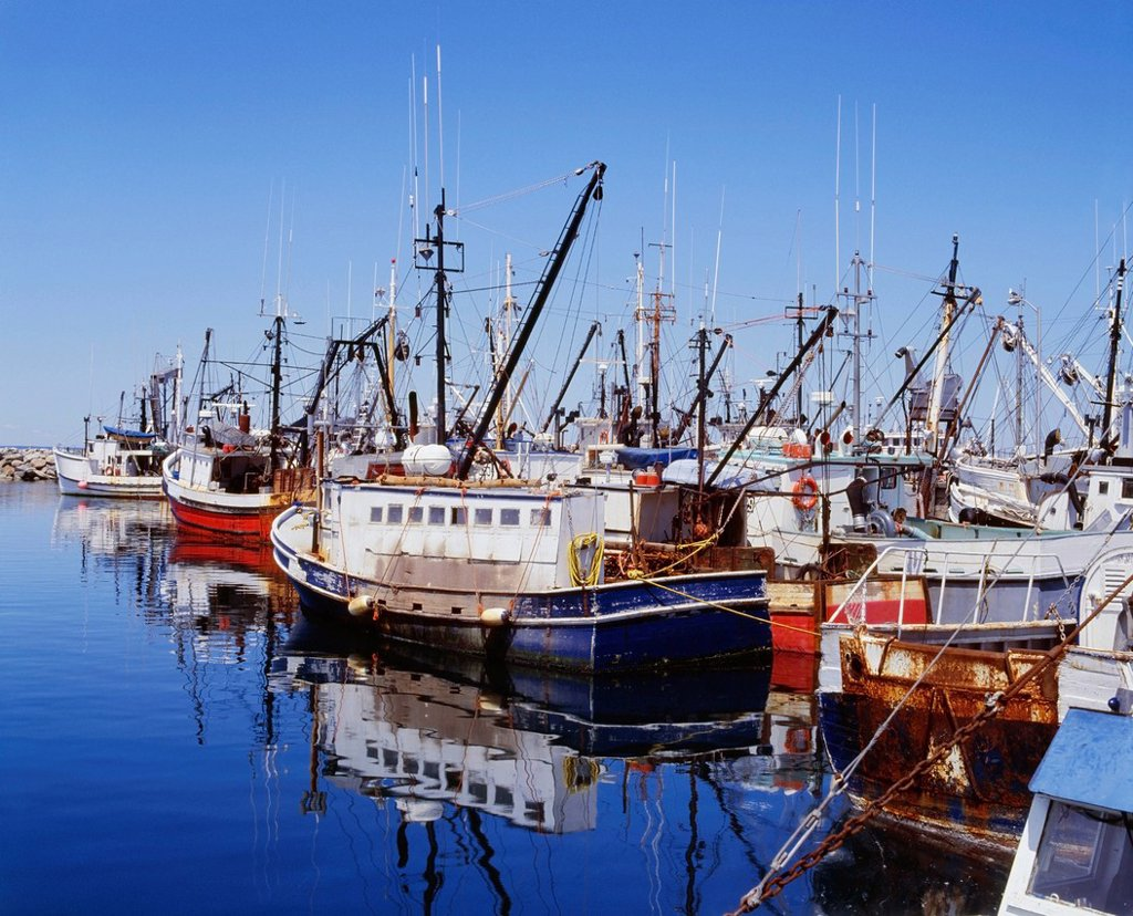 Fishing Boats In Harbor, Digby, Nova Scotia, Canada : Stock Photo