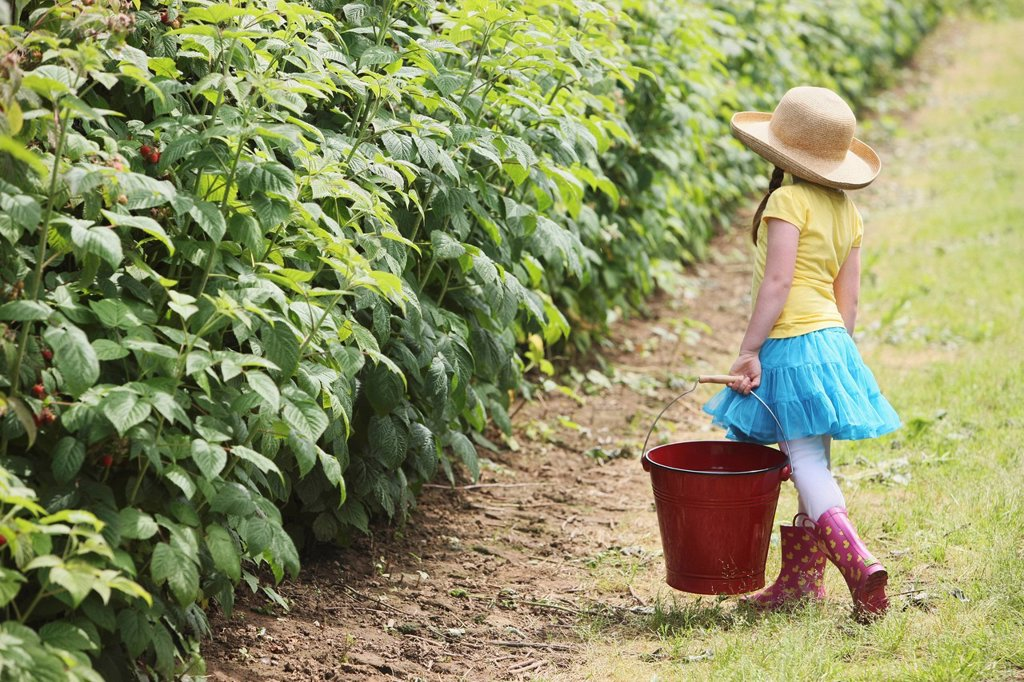 a girl wearing rubber boots and carrying a large, red pail for berry picking, troutdale, oregon, united states of america : Stock Photo