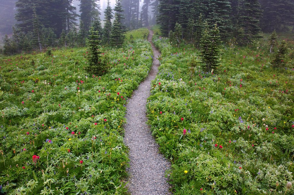 a hiking trail in the fog in paradise park in mt. rainier national park, washington, united states of america : Stock Photo