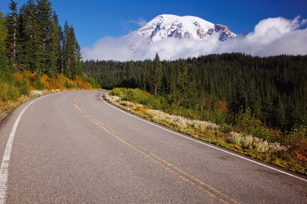 Stock Photo: 1889R-63831 autumn colors along a road in mt. rainier national park, washington, united states of america