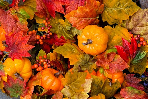 Stock Photo: 1889R-6421 Closeup of autumn display