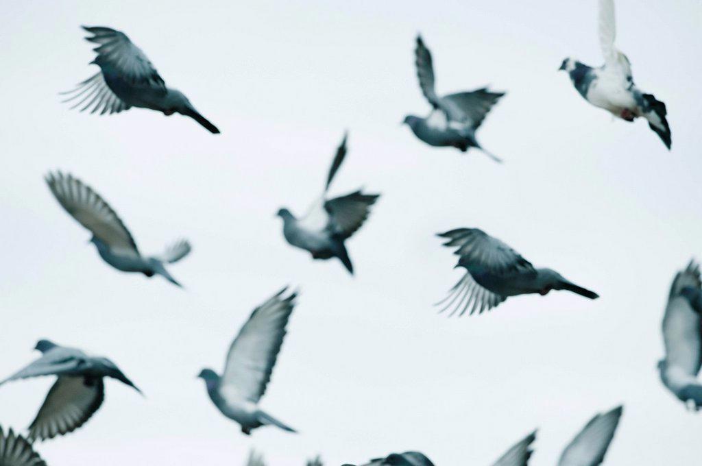 birds in flight in the sky, benalamadena costa, malaga, costa del sol, andalusia, spain : Stock Photo