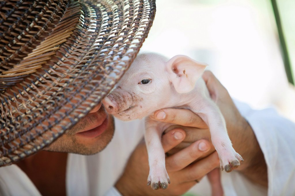 man holding up a baby pig, siquijor, philippines : Stock Photo