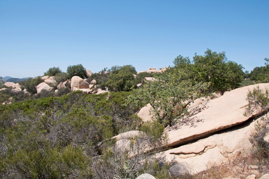 coastal sage scrub habitat in southern california, escondido, california, united states of america : Stock Photo