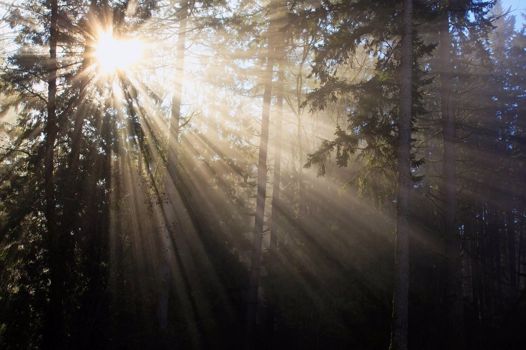 sun shining through morning fog and trees, happy valley, oregon, united states of america : Stock Photo