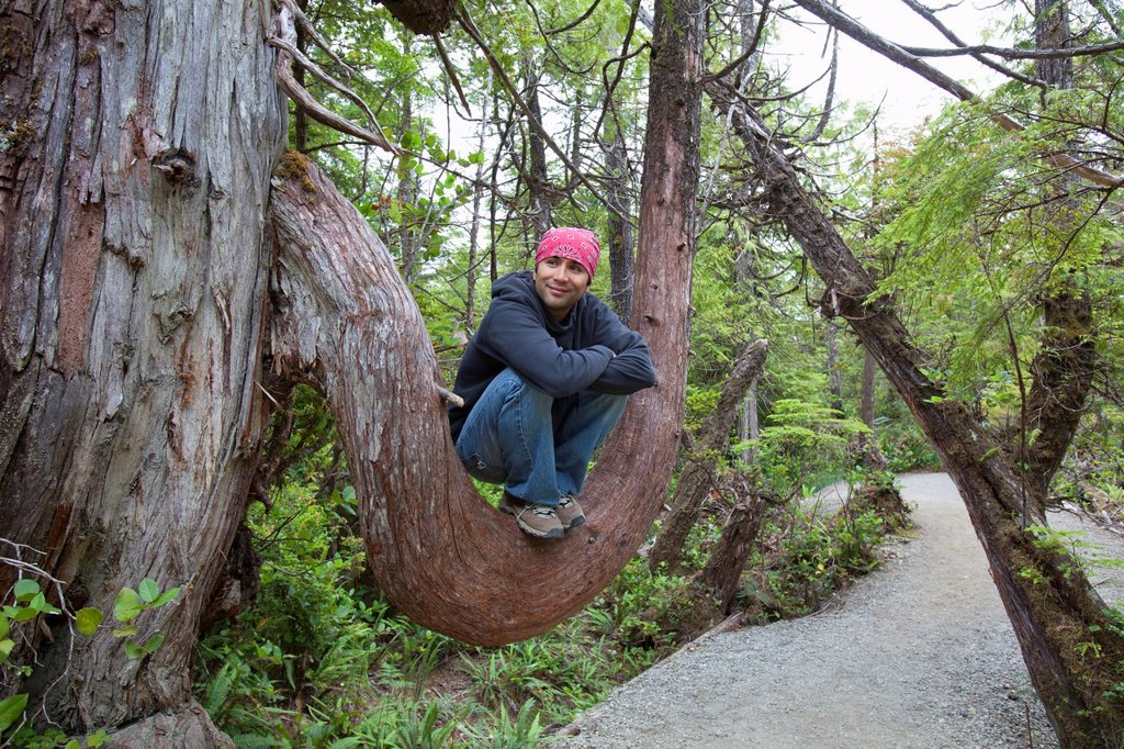 hiker rests in the crook of a large tree branch on the wild pacific trail, ucluelet, vancouver island, british columbia, canada : Stock Photo