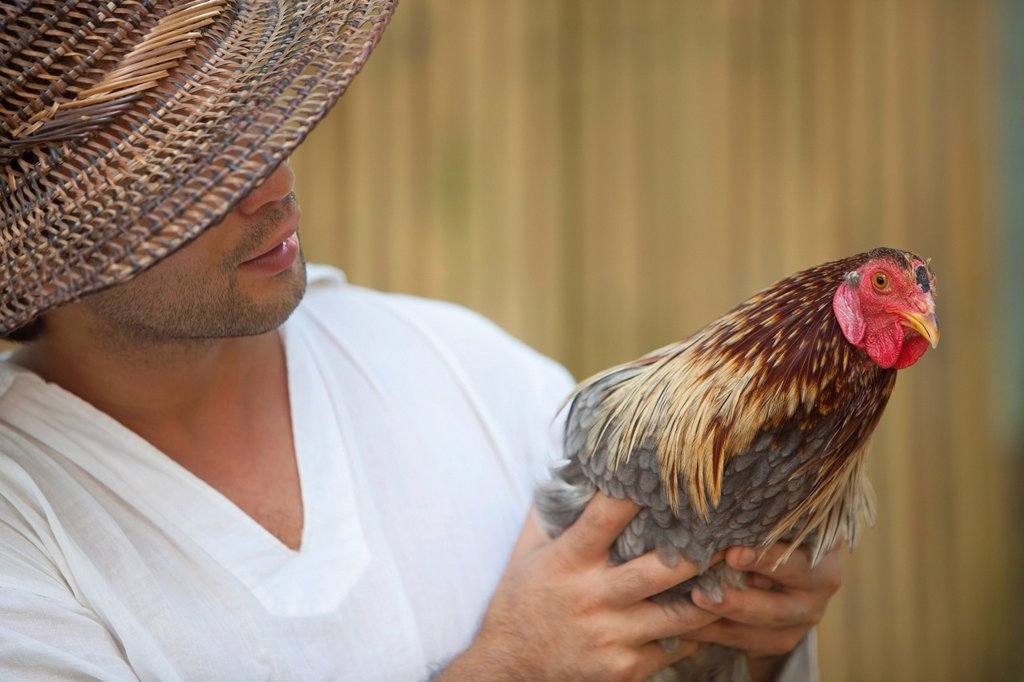 a farmer holds an adult hen, bohol, philippines : Stock Photo