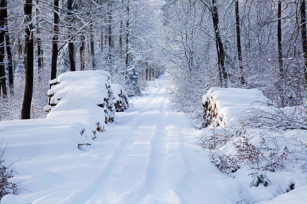 snowy lane, westerwald rhineland_palatinate germany : Stock Photo