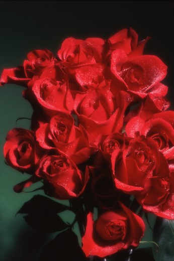 Stock Photo: 1889R-6894 Red roses