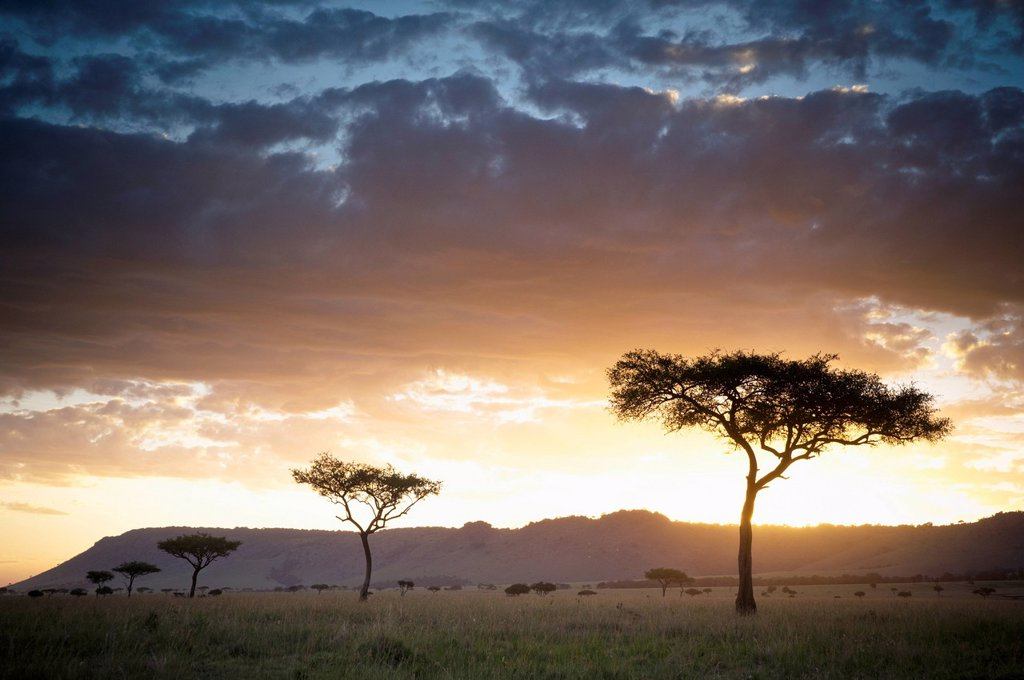 trees and animals across an african landscape at sunset, kenya : Stock Photo