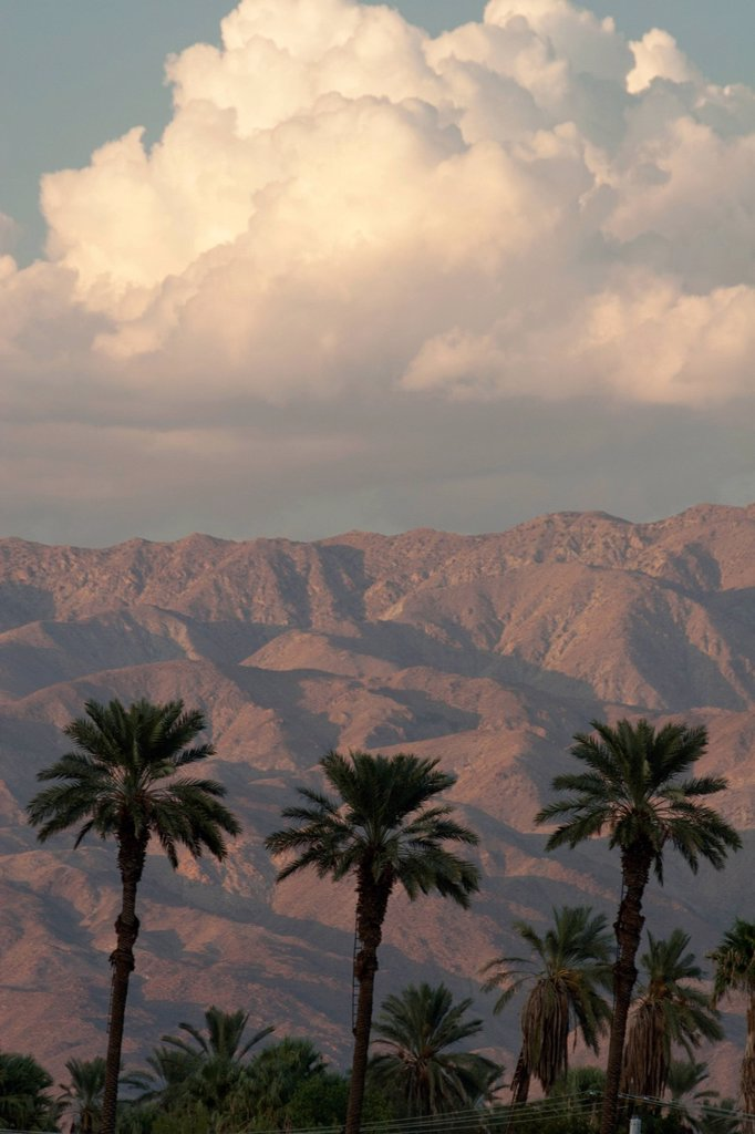 Stock Photo: 1889R-72939 Silhouette Of Palm Trees At Sunset With Light On The Desert Mountain Range In The Distance With Blue Sky And Glowing Thunder Clouds, Palm Springs California United States Of America