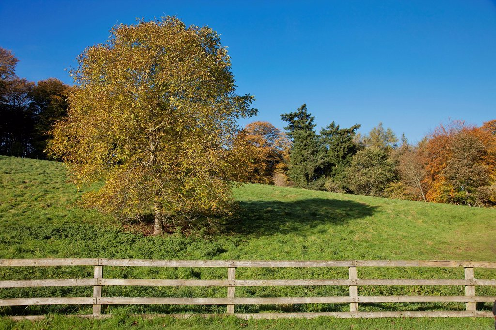 Stock Photo: 1889R-72952 A Wooden Rail Fence With Trees In Autumn Colours, Scottish Borders Scotland