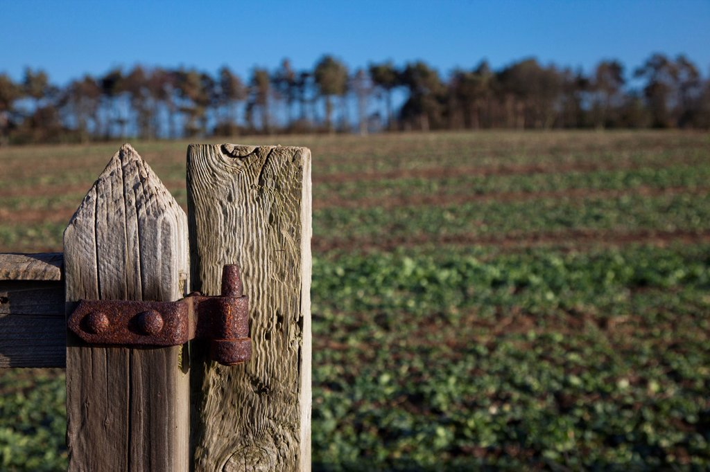 Stock Photo: 1889R-73348 Weathered wooden fence post with rusty hinge, northumberland england