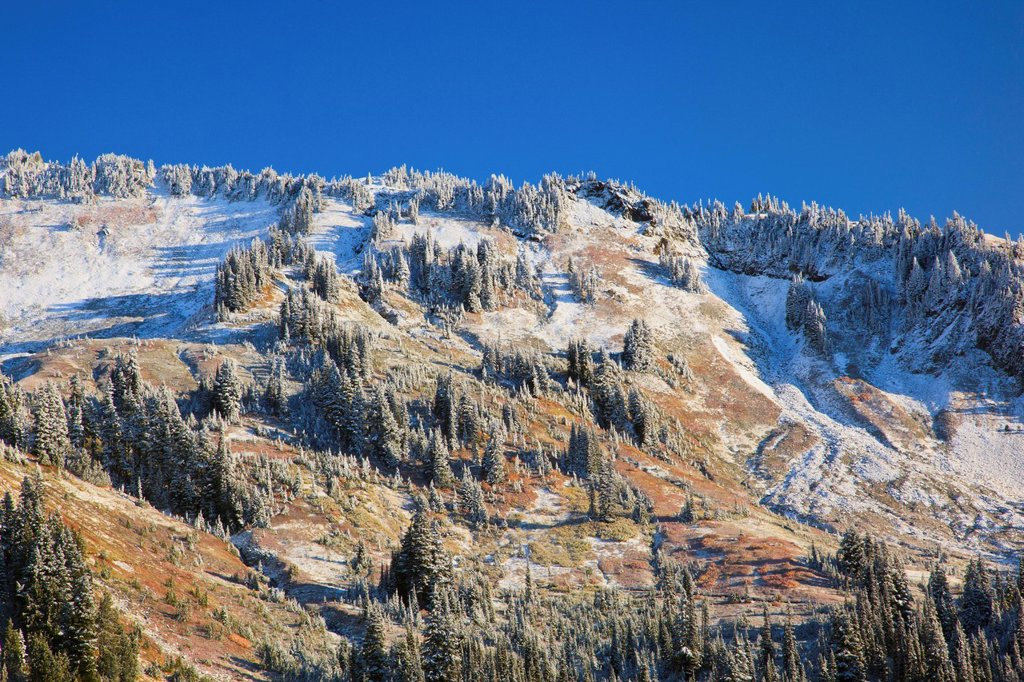 Fresh Snow On Autumn Colours In Mount Rainier National Park, Washington United States Of America : Stock Photo